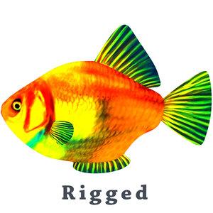 fish nature animal model