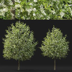 3D bird trees prunus padus
