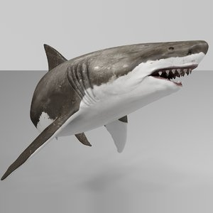 great white shark rigged model
