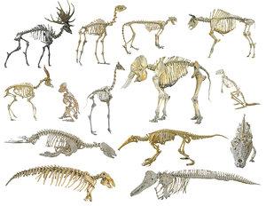 3D skeletons animals hd