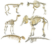 Skeletons of animals HD