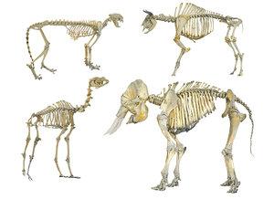 skeletons animals hd model