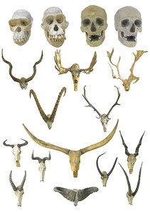 3D skull pack