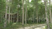 Poplar Forest Summer