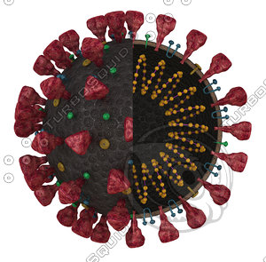 coronavirus sars-cov-2 3D