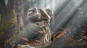 ready helvella lacunosa fungi 3D model