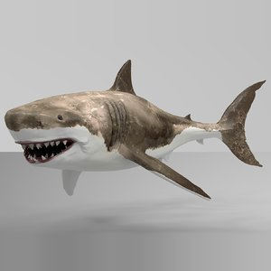 great white shark rigged 3D