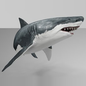 3D great white shark rigged