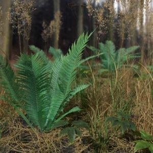 pbr fern meadow patch model