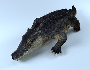 alligator gator rigged 3D