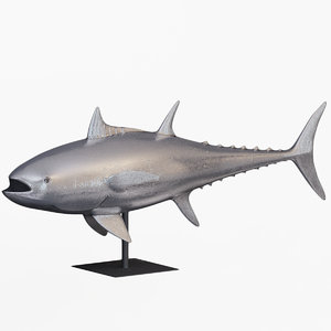3D phillips base bluefin tuna
