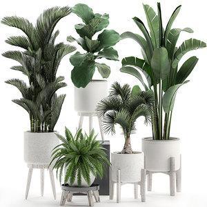 decorative plants white pots 3D