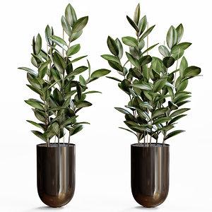 rubber plant decor 3D model