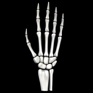 3D skeleton hand skelet