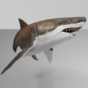 3D model great white shark rigged