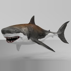 3D great white shark rigged model