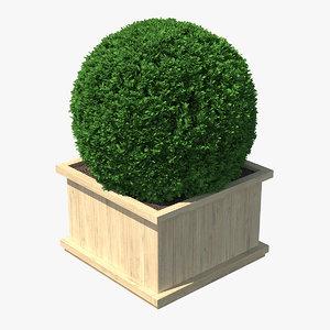 3D boxwood shrub wooden box
