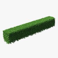 Boxwood Hedge Fence