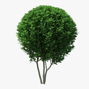 decorative ball shaped boxwood 3D model