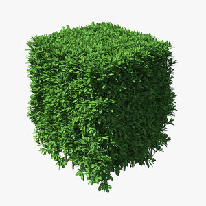 boxwood bush square 3D