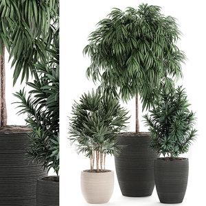 decorative plants black model