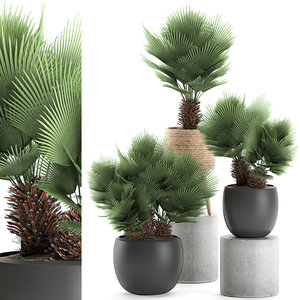 3D decorative palm chamaerops