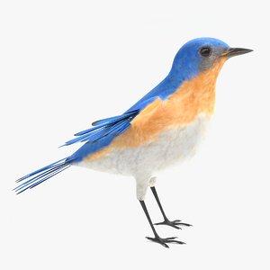 3D bluebird polys model