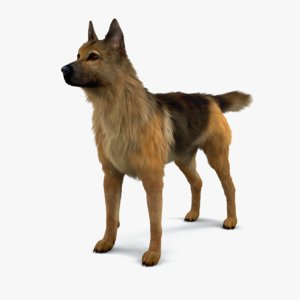 cat fur german shepherd 3D model