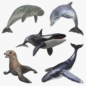 marine mammals 4 3D