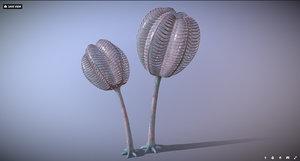 3D siphusauctum gregarium