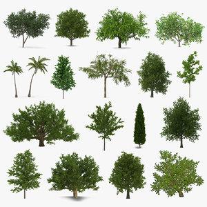 3D summer trees 6 model