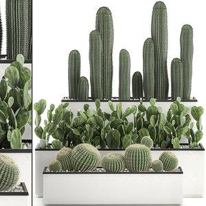3D decorative cactus interior white model