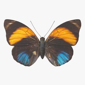 3D agrias amydon butterfly