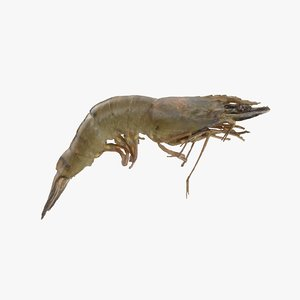 3D raw tiger prawn