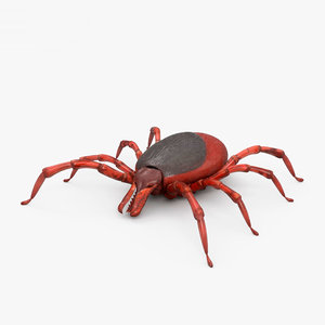 tick insect animal 3D model