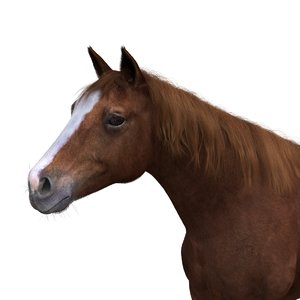 3D horse red