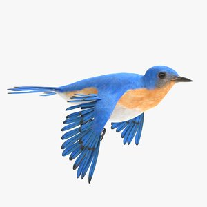 3D bluebird animations model