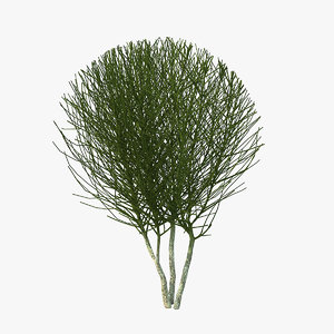 bare shrub 3D model