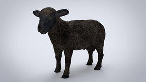 3D black sheep model