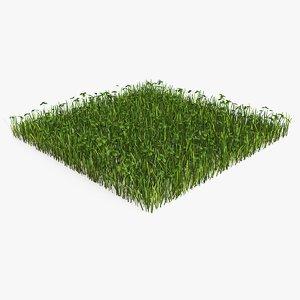 3D lawn grass clovers