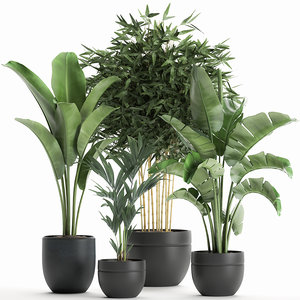 3D decorative plants interior black model