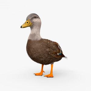 black duck american model