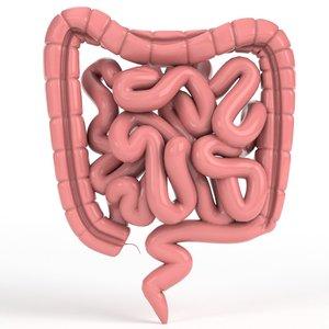 human intestine 3D model