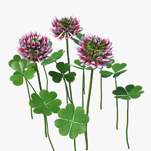 3D blooming red clover field model