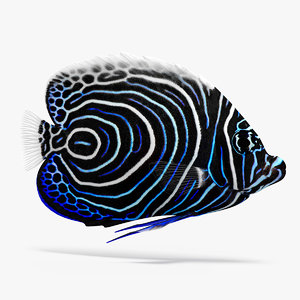3D emperor angelfish fish animation