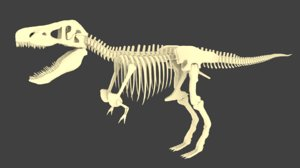 dinosaur skeleton tyrannosaurus 3D model