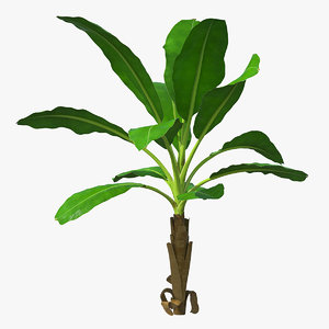 young banana tree 3D model