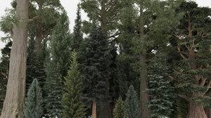 3D model conifer trees 40 summer
