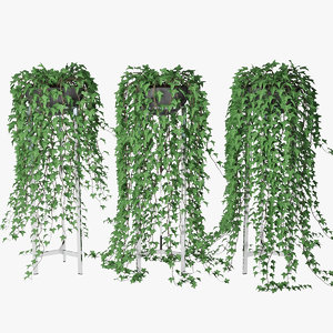ivy pot 3D model