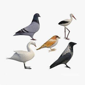 3D city birds